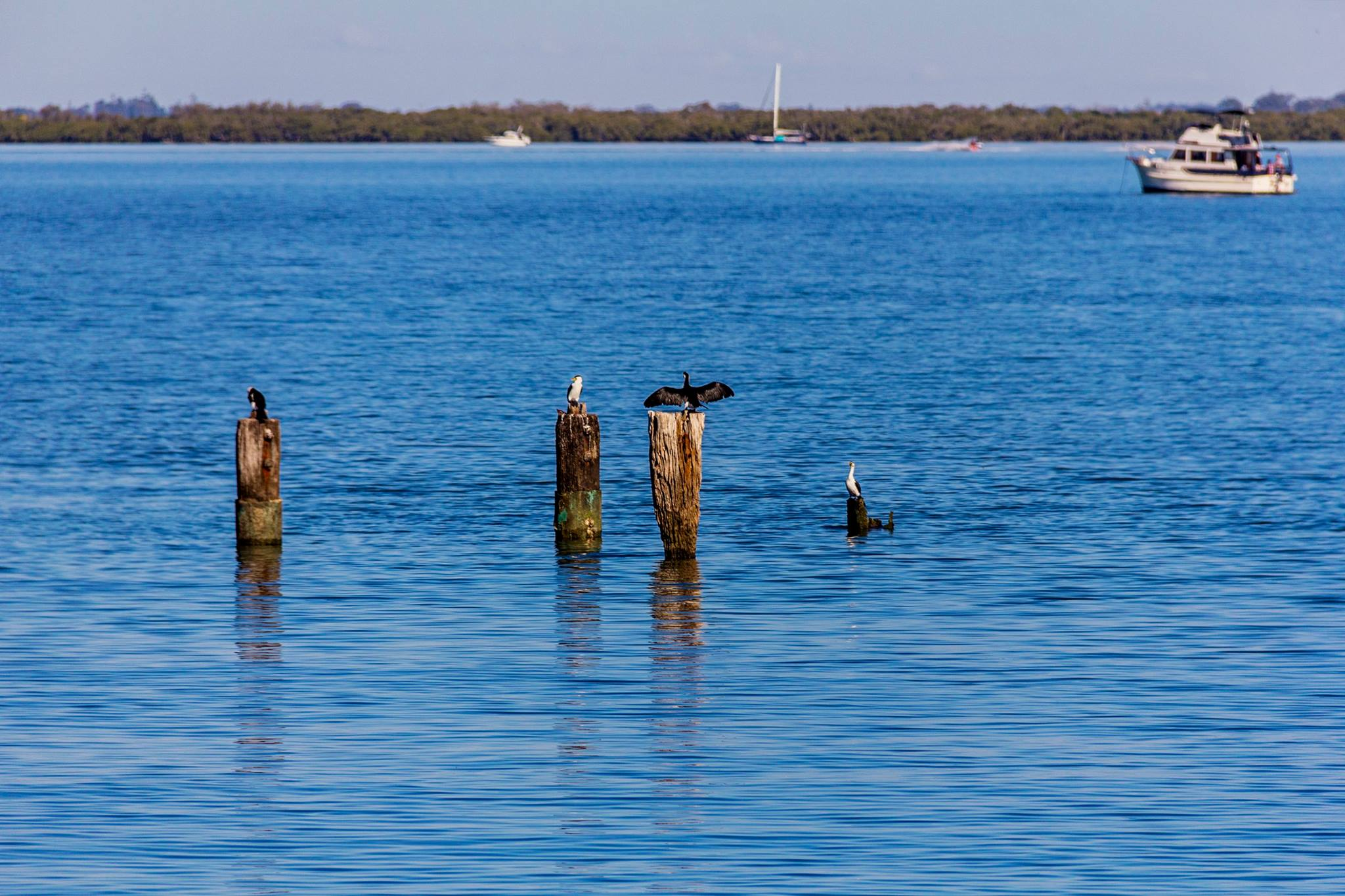 Amanda Cormorants jetty posts