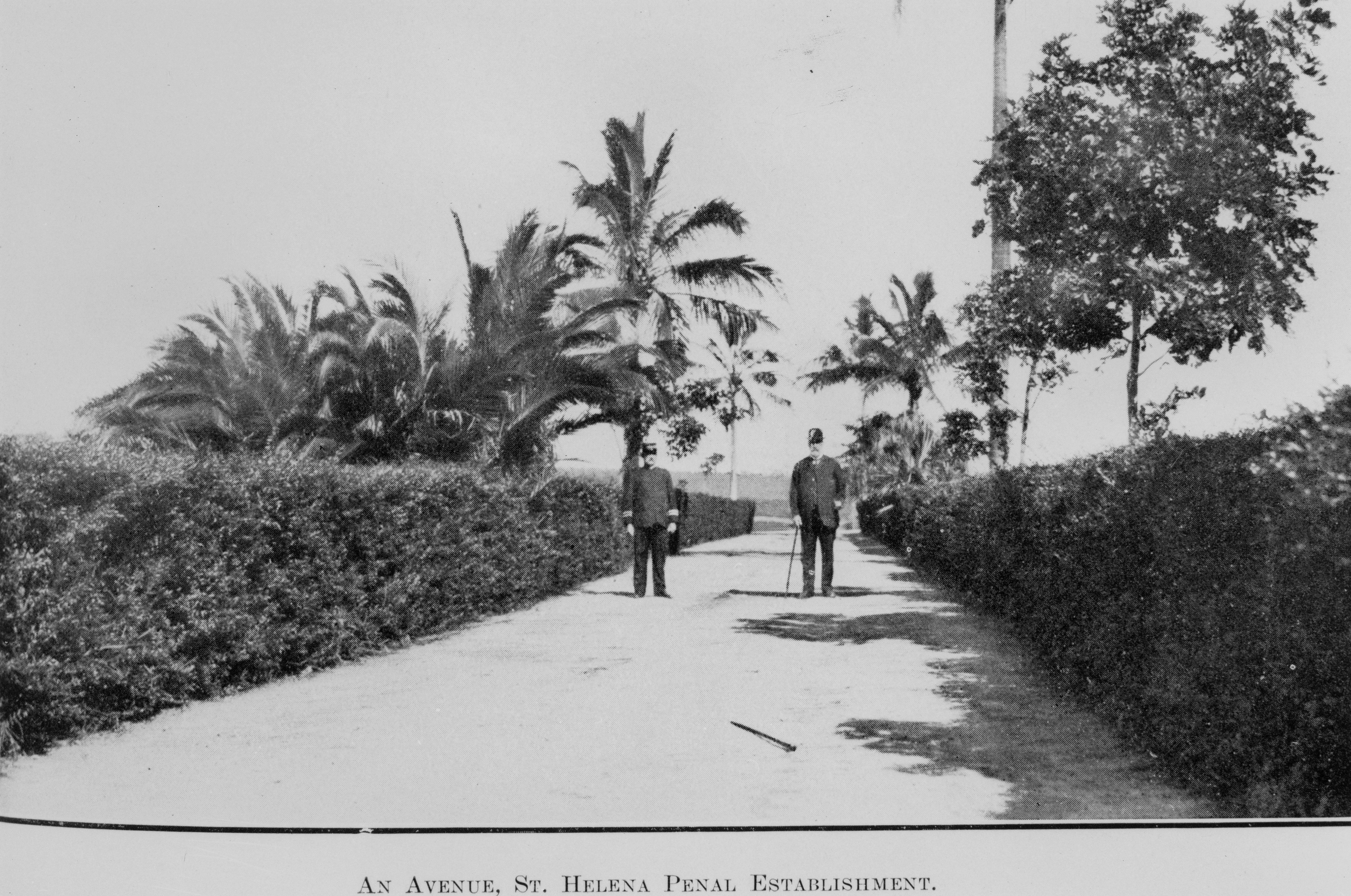 View down an avenue on the northern section of St. Helena Island 1914.jpg