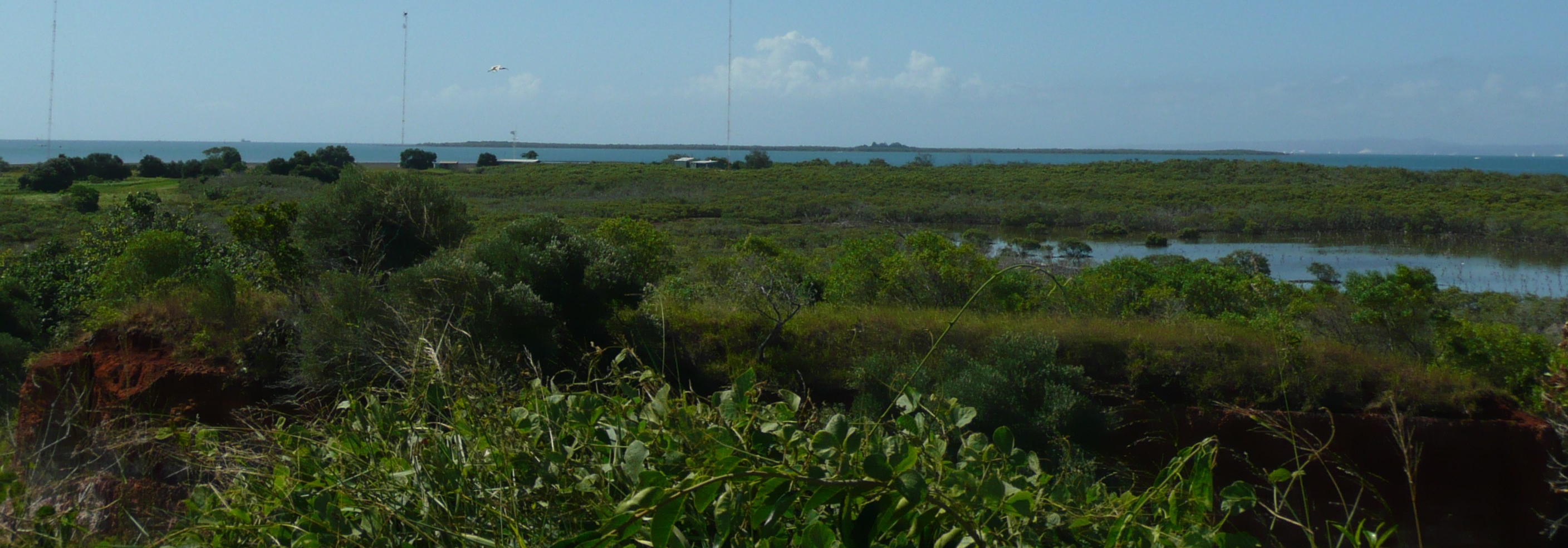 wetlands and radio towers